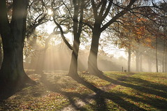 rays of light (Margaret Stranks) Tags: uk november autumn trees light sunlight leaves fog shadows foggy southpark oxford rays headington