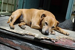 Lymphoma in dogs and cats – integrative medicine