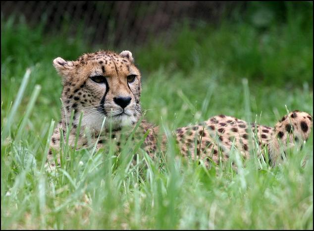Watchful Mama
