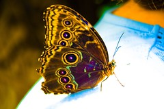 Butterfly (Keith Lovelady's Photography) Tags: red brown color colour green colors butterfly interesting colorful colours purple minolta spot spots maxxum7d 7d greatshot sixflags konica km maxxum konicaminolta aphoto greatphoto beautifulbutterfly greatcolors greatcolor greatcolour km7d agrade beautyisintheeyeofthebeholder greatphotograph konicaminoltamaxxum7d greatcolours sixflagsdiscoverykingdom discoverykingdom kmm7d kmmaxxum7d