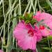 Battery Park Flower