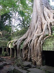 Ta Prohm, Angkor (Khmer: ) - Cambodia - Consorts: nature and man (N3074Echo) Tags: strange ancient ruins cambodia angelinajolie taprohm antiquities angkortemples archeologia otw tombraiders justonelook views200 flickrdiamond mycameraneverlies theunforgettablepictures cambodiaimages historyantiquities stranezzestrangeness comefromlandandsea worldwidetravelogue iconosdetodo drafonflyawards