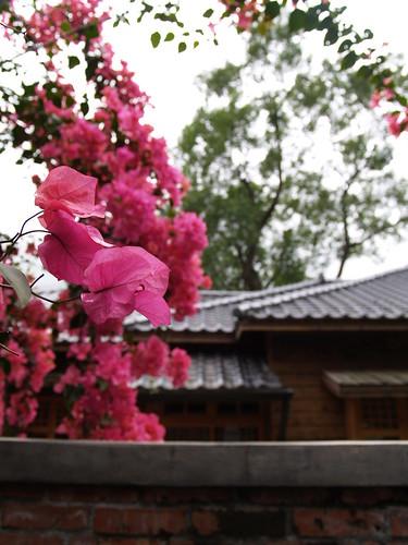 花蓮。林田山
