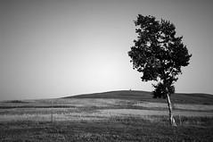 Grasslands (Justin D.) Tags: china tree delete10 delete9 delete5 delete2 boobs delete6 delete7 save3 delete8 delete3 delete delete4 save save2 save4 save5 save6 grasslands innermongolia caoyuan