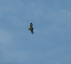 Hawk sil 2