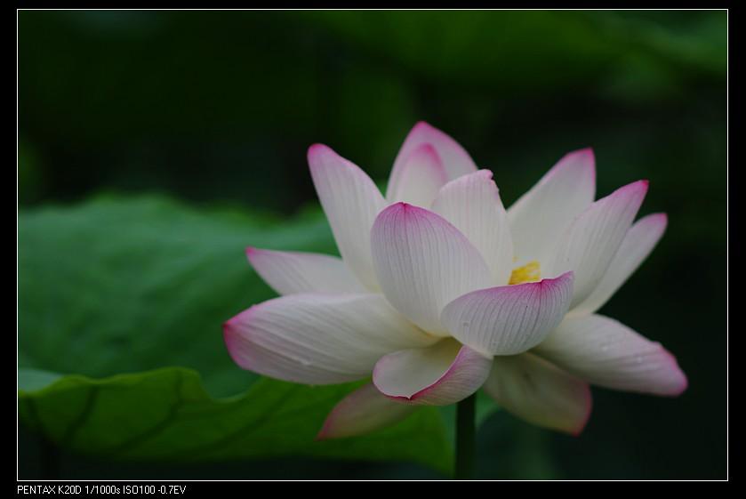 2010/06/16 植物園 Pentax 67 鏡頭上 K20D!