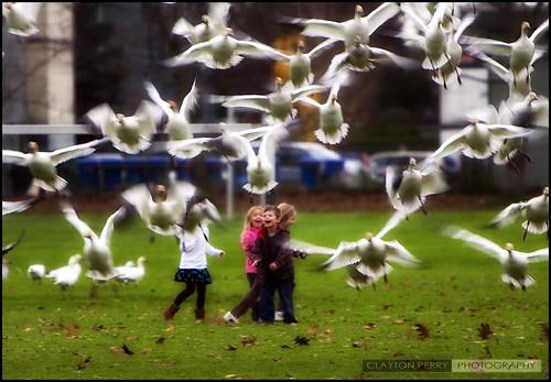 Kids & Geese