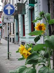 Brussels-farmer-rue-Lesbroussart-12
