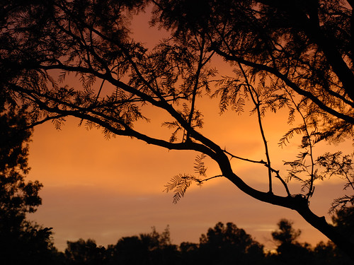 Sunset through the boughs