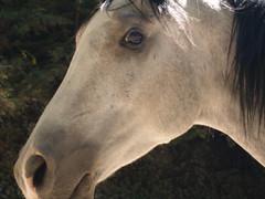 horse (safoocat) Tags: horse olympus e300 safoocat