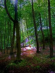 Sunspot in the Glen (g crawford) Tags: wood trees sun tree sunshine scotland scottish glen hdr crawford scots ayrshire copse westkilbride kirktonhall artizenhdr3xpsdisplaytonemapped