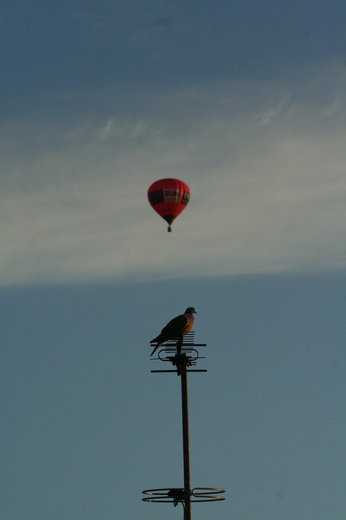 Pigeon and Balloon