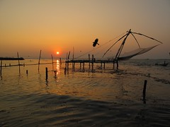Chinese Fishing Net, Kochin