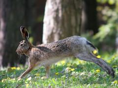 [フリー画像] 動物, 哺乳類, ウサギ科, 兎・ウサギ, 201006181100