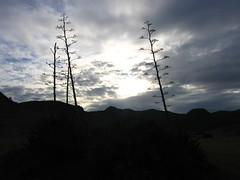 IMG_5022 (Altusken) Tags: espaa beach spain playa andalucia almeria cabodegata pita genoveses
