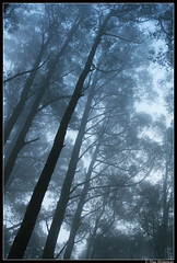 saturday fog (werxj) Tags: trees light mist fog forest australia victoria dandenong coolest soe impressedbeauty diamondclassphotographer flickrdiamond amazingamateur triberainbow jalalspagesmasterpiecealbum cmwd cmwdblue