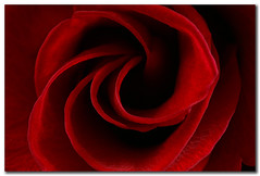 Darkness (Michael.DK) Tags: red flower macro rose closeup spiral darkness excellence naturesfinest 50faves instantfave flowerotica anawesomeshot superhearts searchandreward