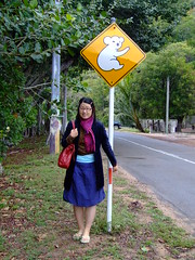 Koala's Next 5km (End of Level Boss) Tags: australia qld queensland lou magneticisland 2007  coala    koaala     koal      hayopngkoala  gingaithucchu