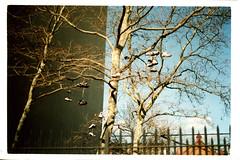 School yard (Josh Blank) Tags: newyork brooklyn 35mm crownheights cannonae1 joshuablank