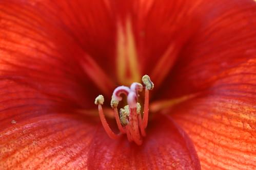 Rojo by J.S.Zolliker