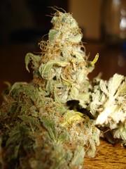 Himalya Gold4 (jhonycogollo) Tags: cannabis marihuana