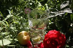 The crest of water (matiya firoozfar) Tags: apple water speed canon high lemon iran alie splash ایران esfahan isfahan اصفهان گل آب alies سیب eos400d matiya lemonsplash matiyafiroozfar ماتیا فیروزفر firoozfar ماتیافیروزفر 400ِd لیمو