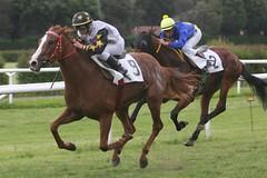 Passa di slancio (roberto_il_pisano) Tags: racetrack firenze cavallo racecourse fearless corsa vittoria cascine galope ippodromo galoppo imco televideo