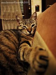 Shhhh! (farnitano.amos) Tags: italy rome roma animal cat italia sleep gatto sonno animale gattoderoma