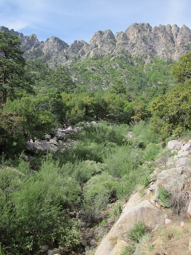Rugged Organ Mountains