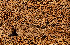 Logs (gordeau) Tags: wood many logs stack gordon merritt ashby flickrchallengegroup flickrchallengewinner thechallengefactory gordeau