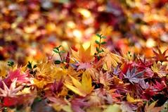 burst (Z Joya) Tags: travel autumn 50mm nikon faith palawan joya d90 aborlan