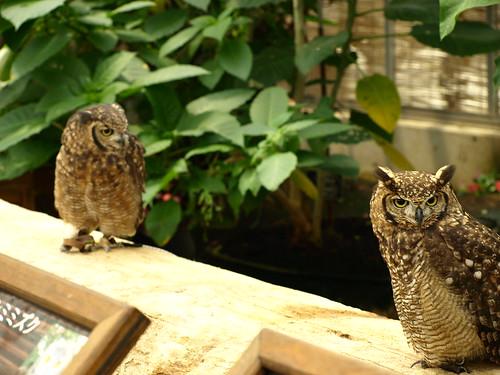 神戸花鳥園 (1)
