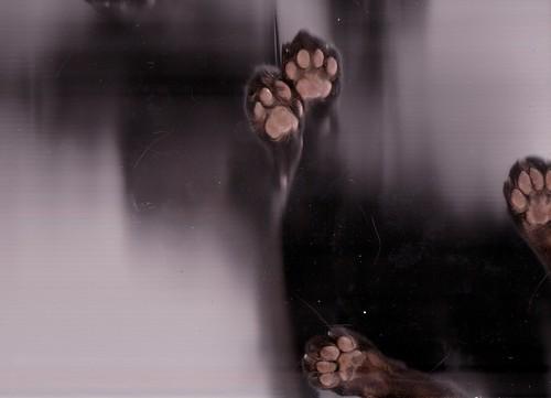 Cat Scan#1