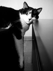 la tte dans le vide (nicouze) Tags: blackandwhite cat table fun chat noiretblanc humor humour tte vide drole marrant 30faves 10faves 25faves