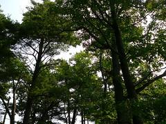 P1030566.jpg (airwaves1) Tags: 1000islands stlawrenceriver july282007 yeoisland