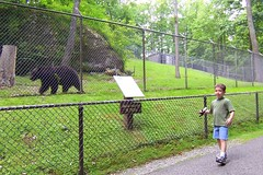 "Adam pacing with a black bear (rcvernors) Tags: bear black adam animal geotagged zoo wildlife wv westvirginia frenchcreek county"" rcvernors frenchcreekgamefarm ""upshur westvirginiastatewildlifecenter"