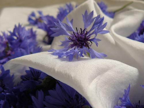 silk & centaurea cyanus