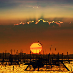 wawa sunset (heliophobe_japs) Tags: world sunset sun silhouette landscape eyes through wawa paragon greatphotographers imagepoetry d80 kartpostal angonorizal flickraward allxpressus betterthangood flickrbestpics trolledproud theadmirergroup pastfeaturedwinner flickraward5 exoticimage abokehoflight flickrawardgallery exceptionalphotographsgroup celebratingnaturegroup