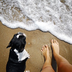 . (susilalala) Tags: beach playa frenchbulldog nuka bulldogfrances susilalala gettyiberiasummer