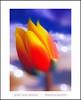 Para vosotros, queridos amigos del alma (Jose Luis Mieza Photography) Tags: flowers flores flower fleur fleurs flor benquerencia florews reinante jlmieza bewellamigo reinanteelpintordefuego joseluismieza