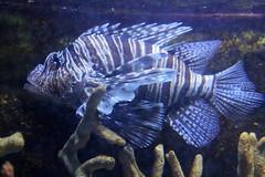 Jenkinson's Aquarium