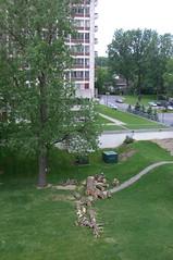 Coupe d'arbres au Belle-Rive