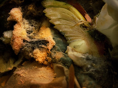 Waste (Kevin Day) Tags: stilllife food bread recycled creamed rubbish onion waste refuse mould compost recycling kevday environmentallyfriendly disposed rottingmatter