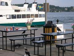 Vaxholmban (myzaberlin) Tags: stockholm seagull vaxholm