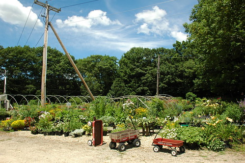 Southern Exposure Nursery, Rutland, Massachusetts