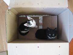 IMG_3867 (preshaa) Tags: google kitten box cardboard kitteh lolz