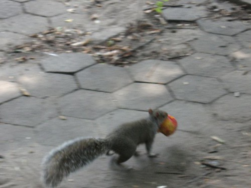 Squirrel with Peach