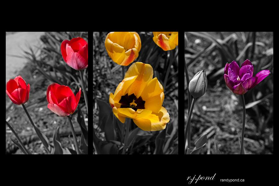 ~ 133/365 3 Colour Challenge ~