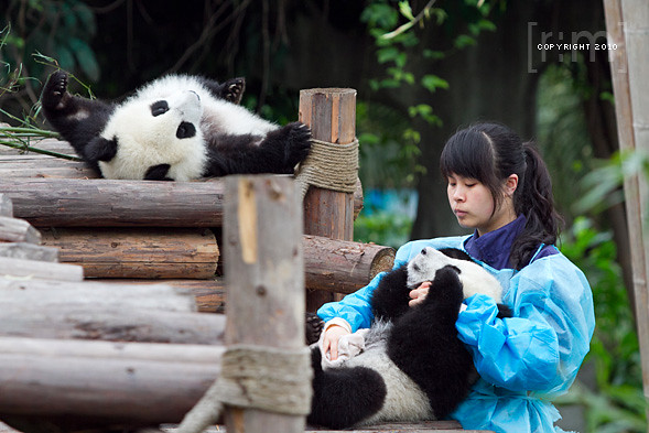Chengdu Panda Breeding Centre