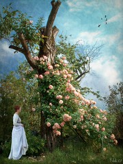 the inner tree (Eddi van W.) Tags: roses woman tree green texture love creativity digitalart gimp creativecommons meditation deepness eddi07 graphicmaster